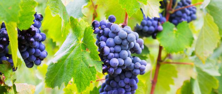 Unsere Weinkellereien 2018 – Edition Brixen